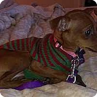 Adopt A Pet :: Bambi - McDonough, GA