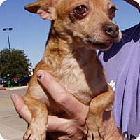 Adopt A Pet :: Rusty - Bedford, TX