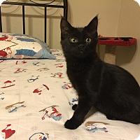 Adopt A Pet :: Onyx - Loveland, CO
