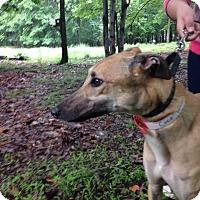 Adopt A Pet :: Coco Vandeweghe - Gerrardstown, WV