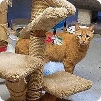 Adopt A Pet :: HARPO - Phoenix, AZ