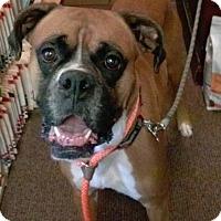 Adopt A Pet :: Jasper - Woodbury, MN