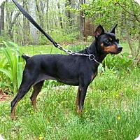 Adopt A Pet :: Sasha - Canterbury, CT