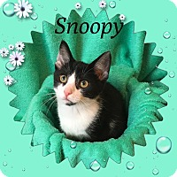 Adopt A Pet :: Snoopy - Covington, KY