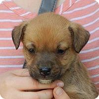 Adopt A Pet :: Levi (5 lb) Video! - SUSSEX, NJ
