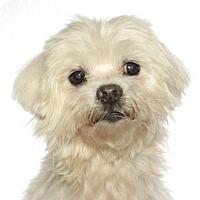 Adopt A Pet :: Bongo - Oakland Park, FL