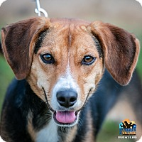 Adopt A Pet :: Breann - Evansville, IN