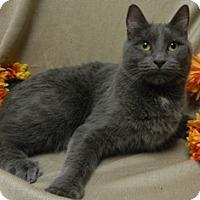 Adopt A Pet :: Diana - Columbus, NE