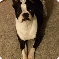 Adopt A Pet :: Maddie in NY - Providence, RI