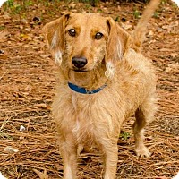 Adopt A Pet :: Frito - Brownsboro, AL
