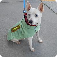 Adopt A Pet :: Stewie - Ashland, VA