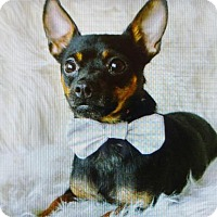 Adopt A Pet :: Luigi - Kenner, LA