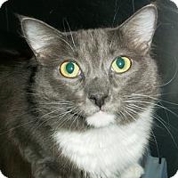 Adopt A Pet :: Wolfie - Castro Valley, CA