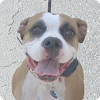 Adopt A Pet :: Katona - Central & West Florida, FL