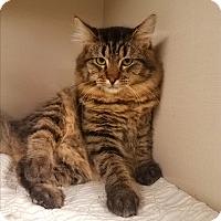 Adopt A Pet :: C-1 - Indianola, IA