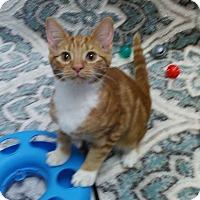 Adopt A Pet :: Mars - Brandon, FL