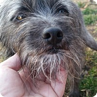Terrier (Unknown Type, Medium) Mix Dog for adoption in Providence, Rhode Island - A Sir Winston Junior in RI COME MEET ME!!