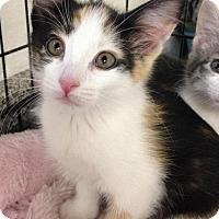 Adopt A Pet :: Marigold - River Edge, NJ