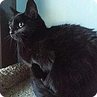 Adopt A Pet :: Sissy Lou - Fresno, CA