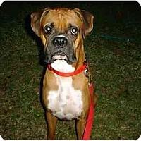 Adopt A Pet :: Marlin - Savannah, GA