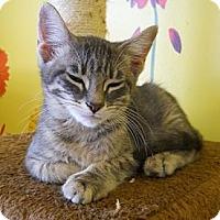 Adopt A Pet :: Bogart - Mobile, AL
