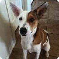 Adopt A Pet :: Bella - Justin, TX