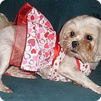 Adopt A Pet :: Danielle - Mooy, AL