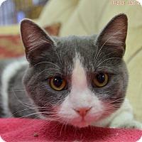 Adopt A Pet :: Maggie - Medina, OH