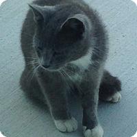 Adopt A Pet :: Jodie - Fort Wayne, IN