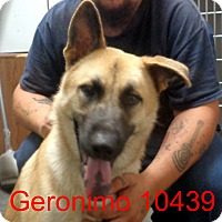 Adopt A Pet :: Geronimo - baltimore, MD