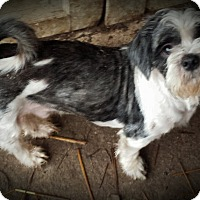 Adopt A Pet :: Snuggles S.A.M courtesy listin - Sherman, CT