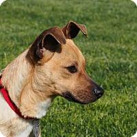 Adopt A Pet :: Kyler - Sunnyvale, CA