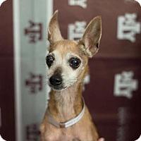 Adopt A Pet :: Katie Ledecky - Brooklyn, NY