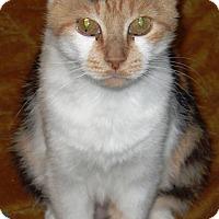 Adopt A Pet :: Marcie - Kalamazoo, MI