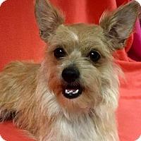 Adopt A Pet :: Jessica - Alta Loma, CA