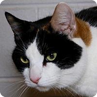 Adopt A Pet :: Daisy - Salem, MA