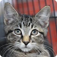 Adopt A Pet :: Short Round - Sarasota, FL