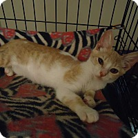 Adopt A Pet :: Alex - Central Islip, NY