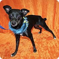 Adopt A Pet :: Victor - Jackson, MI
