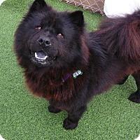 Adopt A Pet :: Roxy - Sacramento, CA