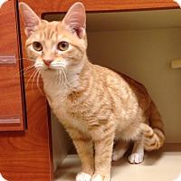 Adopt A Pet :: Pumpkin - North Wilkesboro, NC