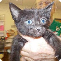 Adopt A Pet :: A046918 - Temple, TX