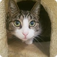 Adopt A Pet :: Princess Tipsy - White Lake, MI