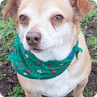 Adopt A Pet :: Rascal - Georgetown, TX