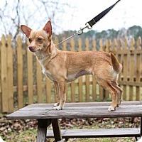 Adopt A Pet :: Priscilla - Murphysboro, IL