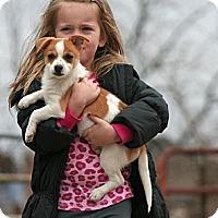 Adopt A Pet :: Herme - Spring City, PA