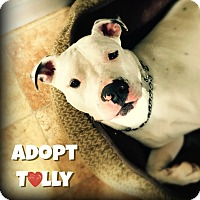 Adopt A Pet :: Tully - Wantagh, NY