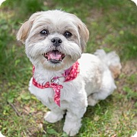 Adopt A Pet :: Beatrice - Drumbo, ON