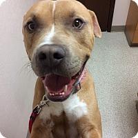Adopt A Pet :: Stewy - Van Nuys, CA
