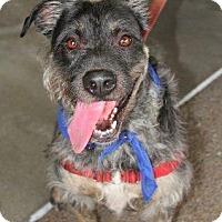 Adopt A Pet :: Jake - Vista, CA